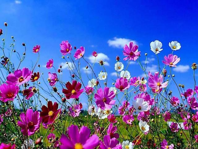 Una settimana fresca di primavera