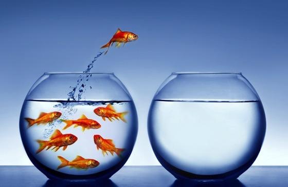pesce che salta da una vaschetta all'altra